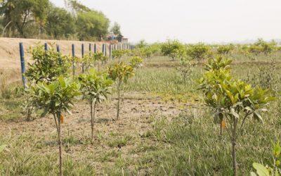 Pour la biodiversité et les services écosystémiques: plantons des arbres !