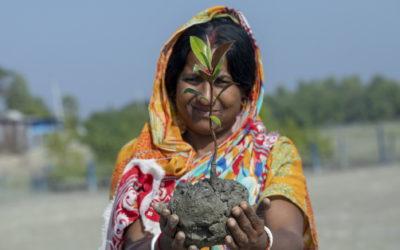 Des arbres pour le climat et la résilience – Trees for climate and Resilience