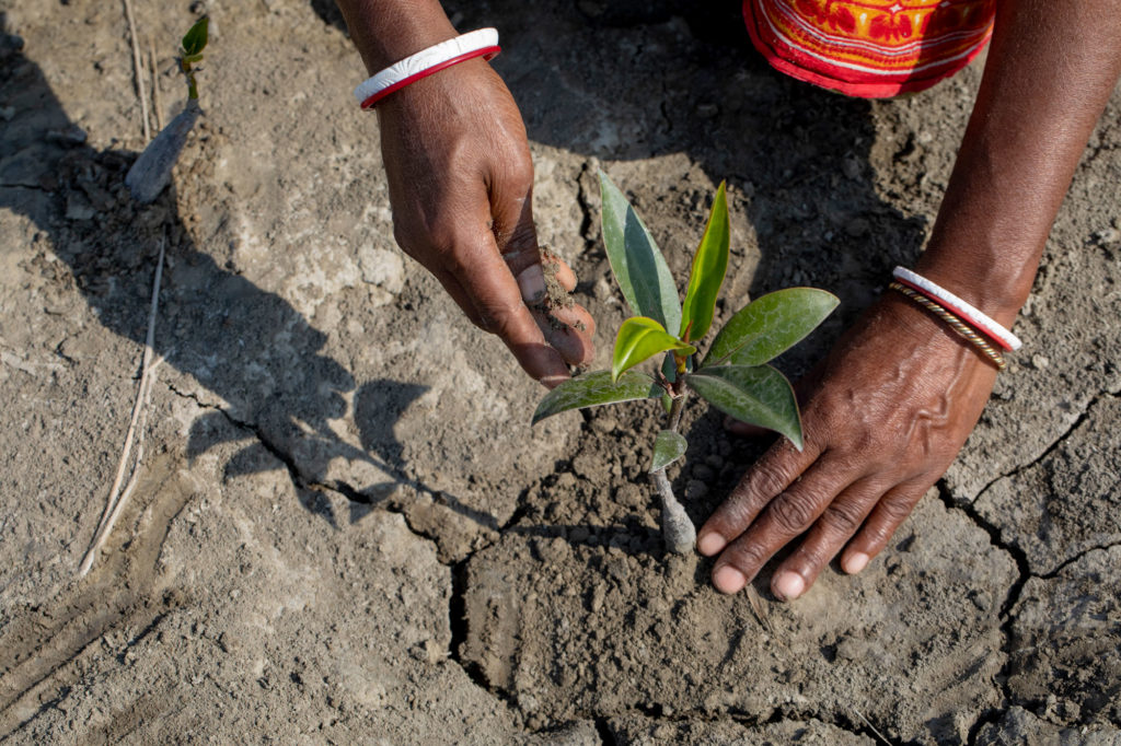climate crisis_nature based solution