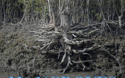 Exposition photo sur les mangroves